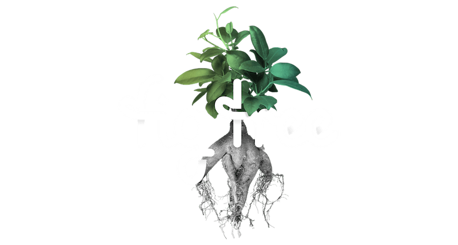 Fig Tree Digital - Growth through change